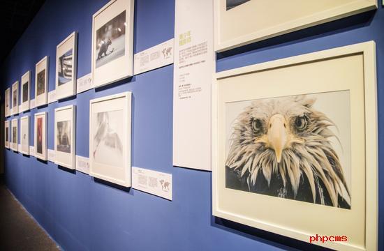 全球顶尖野生生物摄影作品亮相浙江自然博物馆